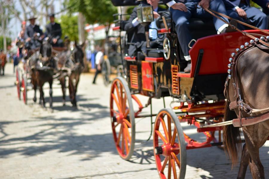 Hästar i Andalusien