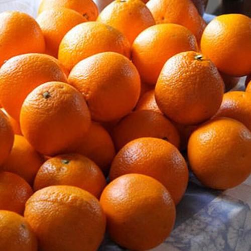 Spanska apelsiner
